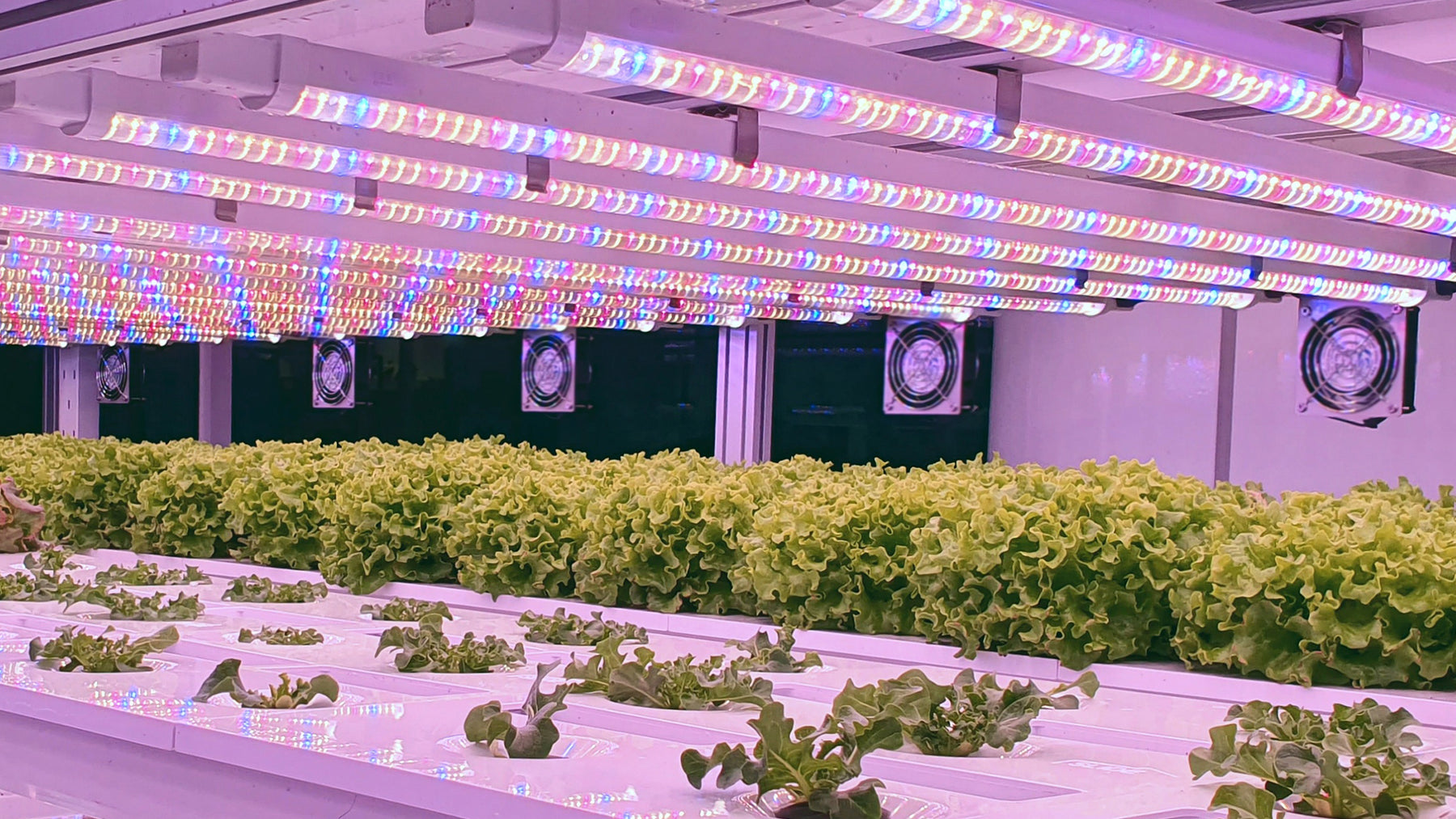 Choosing the Right Grow Light Timer
