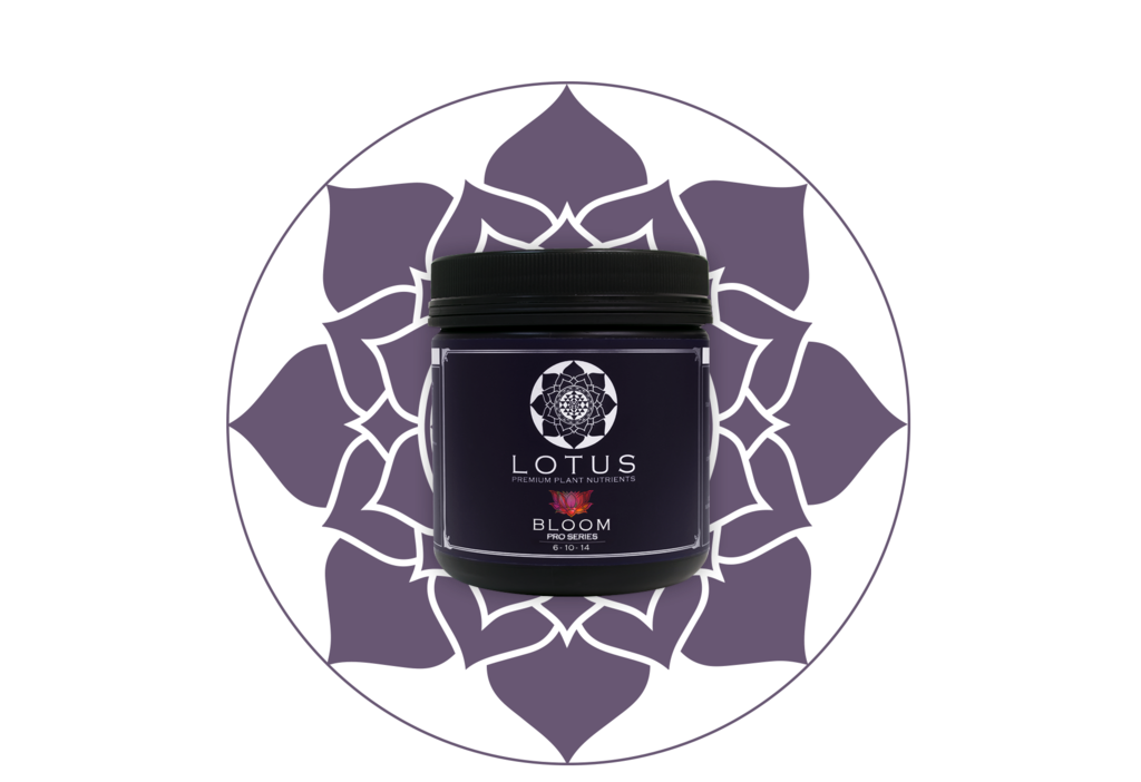LOTUS Pro Series - BLOOM