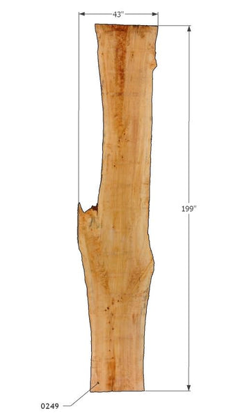 "0249250 - Poplar - 168""L x 47.75""W - Meyer Wells"