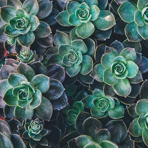 Succulent Shower Curtain