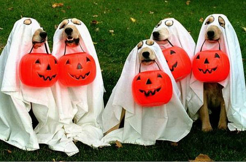 dogs halloween tips