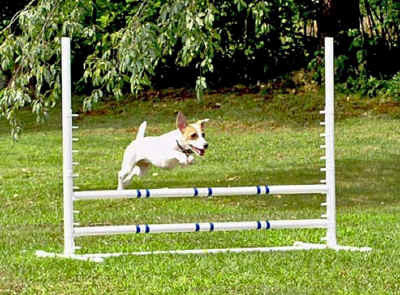Competition Adjustable Jump - Dog toys