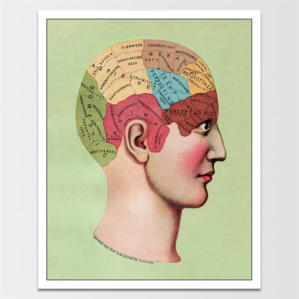 "Sale! 6X8"" 1909 Phrenology Print *REMASTERED*"