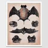 1800's Bats on Display Lithograph Print *REMASTERED*
