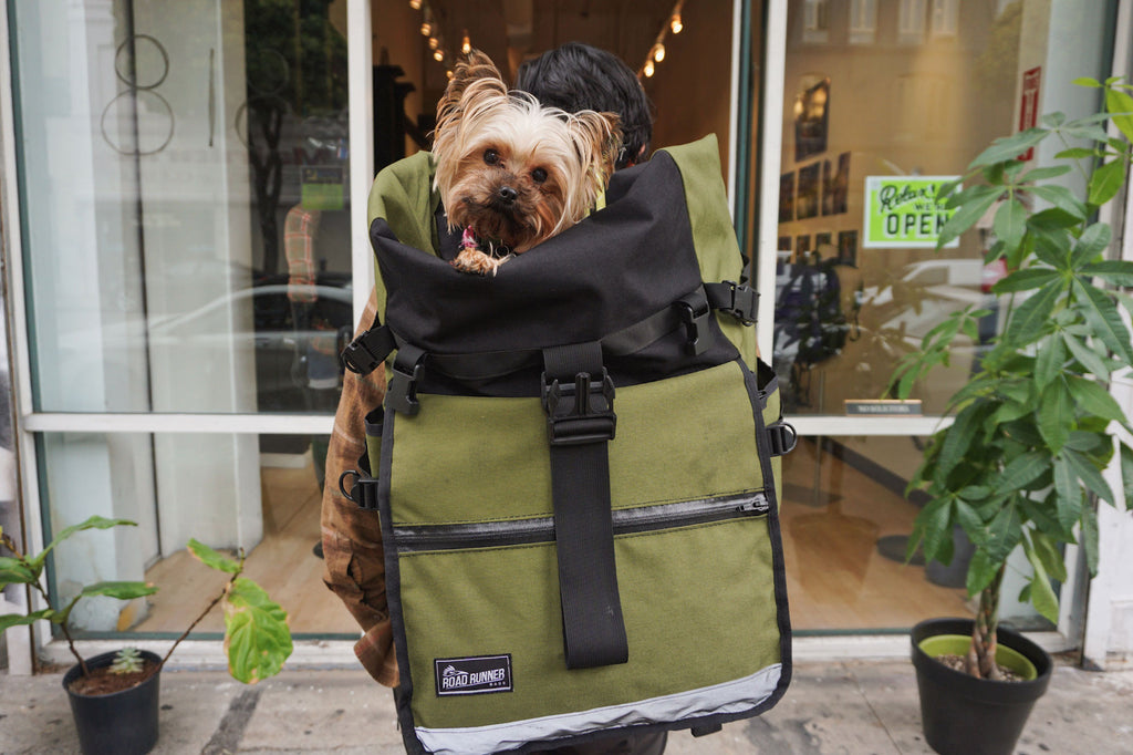 cute dog in a backpack