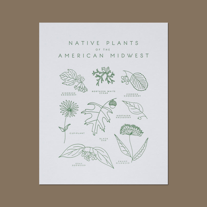 Native Plants of the American Midwest Letterpress Print