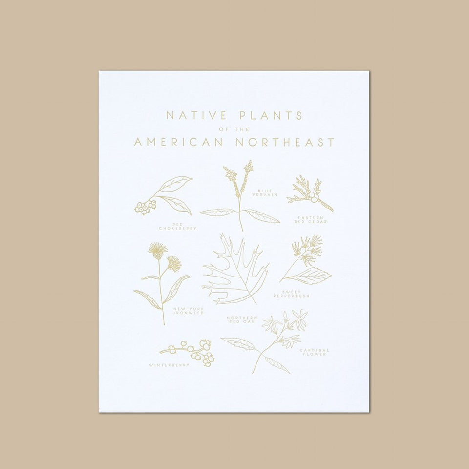 Native Plants of the American Northeast Letterpress Print