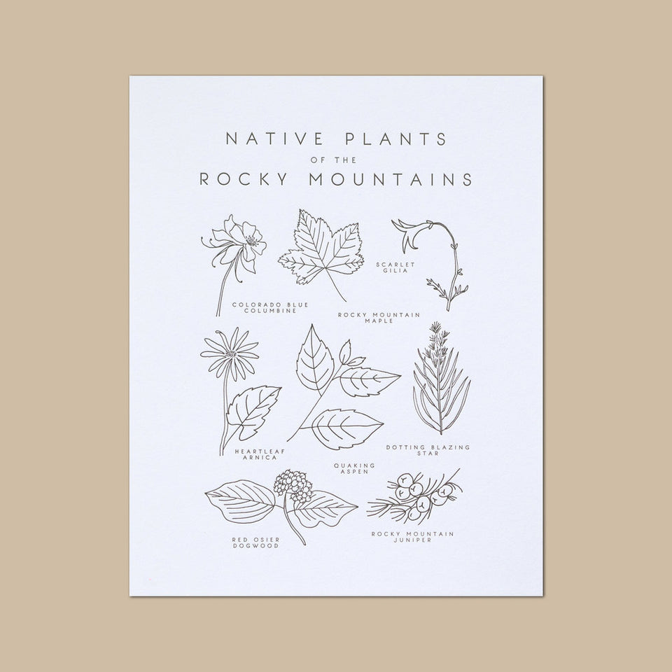 Native Plants of the Rocky Mountains Letterpress Print