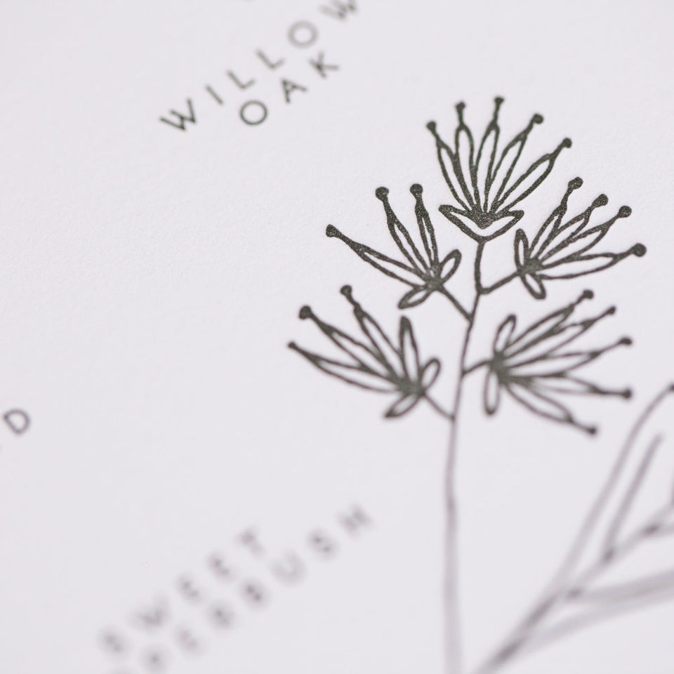 Native Plants of the American Southeast Letterpress Print