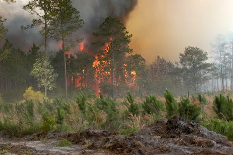 Using e-cigarettes instead of actual cigarettes in forests can help to prevent forest fires.