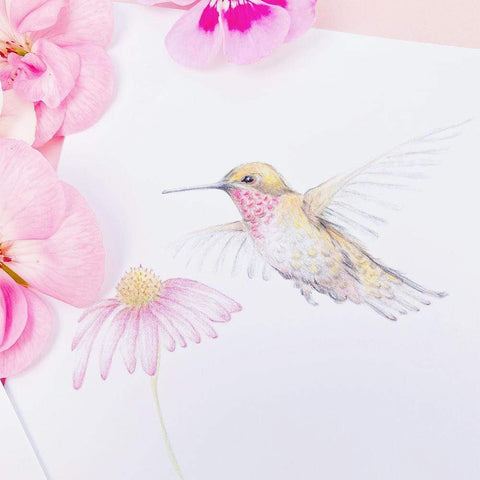 NEW Greetings Cards Ruby Hummingbird Greetings Card