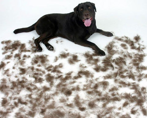 How to remove lint from your dog grooming uniforms.