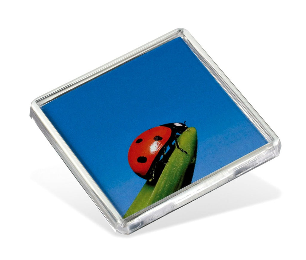 Adventa - Square Fridge Magnet