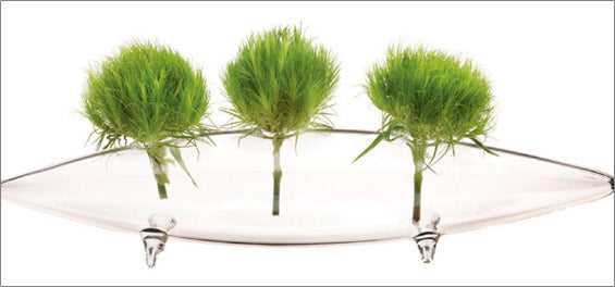 chive vase wholesale | sale products
