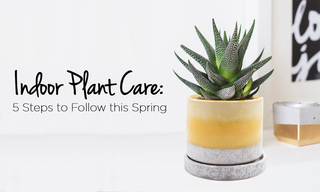 Indoor Plant Care | 5 Steps to Follow this Spring