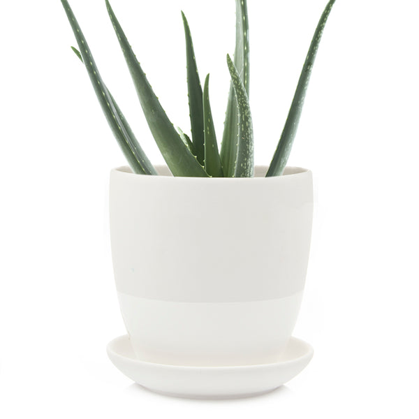 Big Dyad Pot & Saucer - Chive |