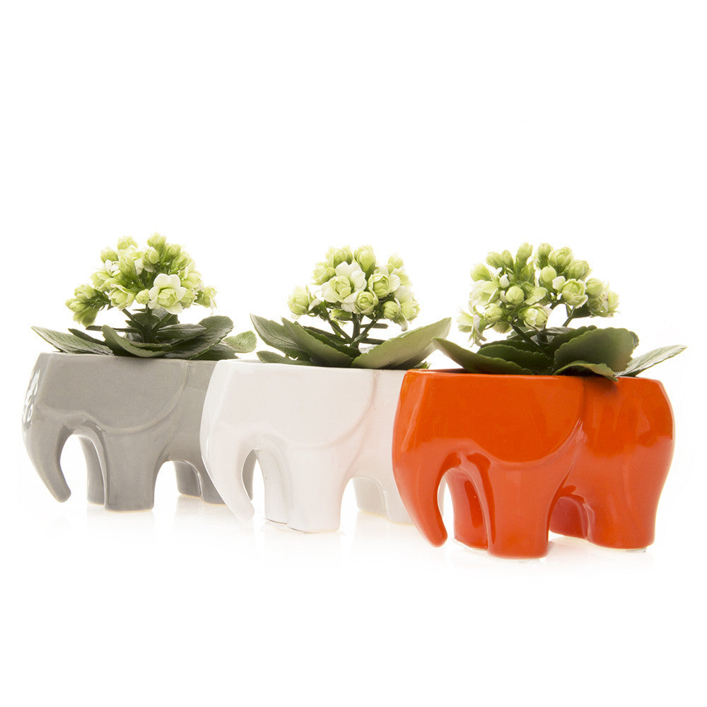 Chive Elephant Ceramic Planter