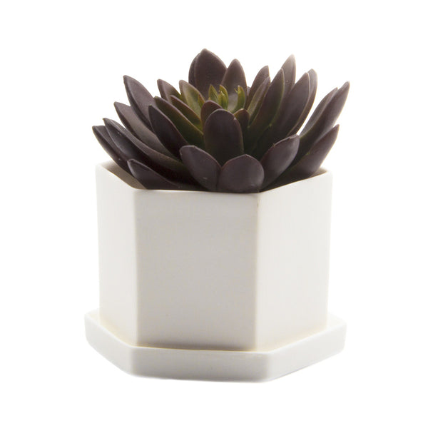 Hexi Pot & Saucer - Chive |