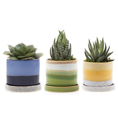 Modern and Contemporary Pottery, Vases, and Terrariums | Chive on wholesale books, wholesale martini vases, wholesale wine glasses, wholesale silver vases, wholesale glassware, wholesale crystal vases, wholesale figurines, wholesale linens, wholesale hurricane vases, wholesale boxes, wholesale small vases, wholesale key chains, wholesale bulk wedding vases, wholesale containers, wholesale glass vases, wholesale blue vases, gold vases, small ceramic vases, plastic vases, wholesale tall vases,