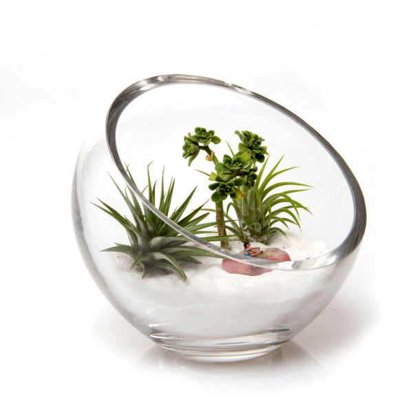 Terrarium Bowl Chive Products Llc