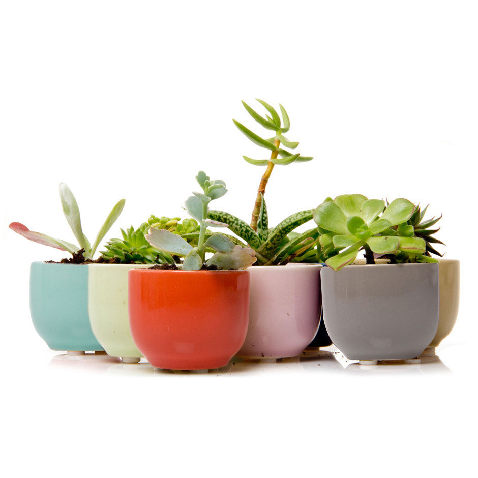 succulent cup mix chive products llc