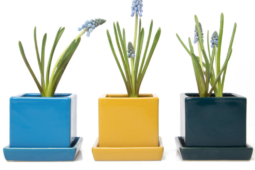 Modern And Contemporary Pottery Vases And Terrariums Chive