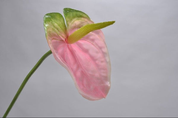 Anthurium 79cm Green Pink