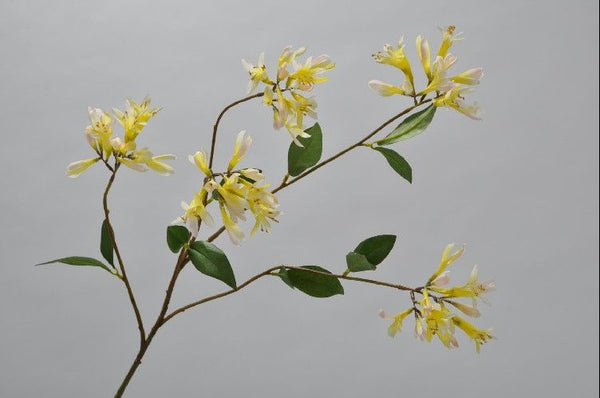 Honeysuckle | Chèvrefeuille 96cm White Yellow