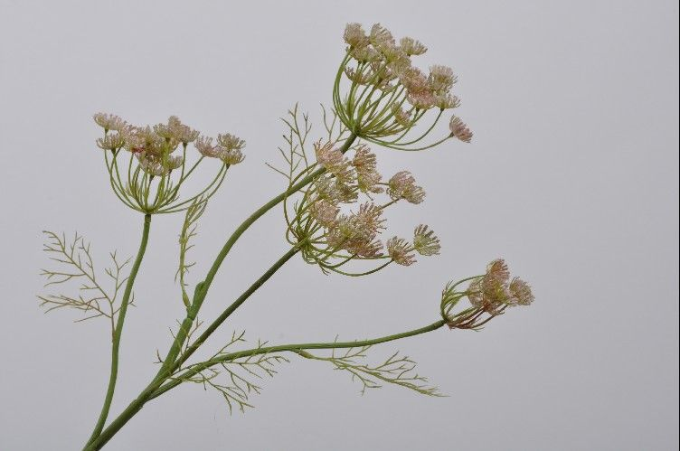 Queen Anne's Lace | Aneth 82cm Pink