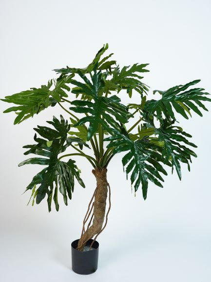 Philodendron 145cm
