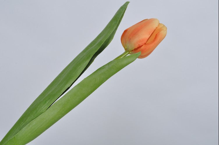 Tulip | Tulipe 38cm Orange