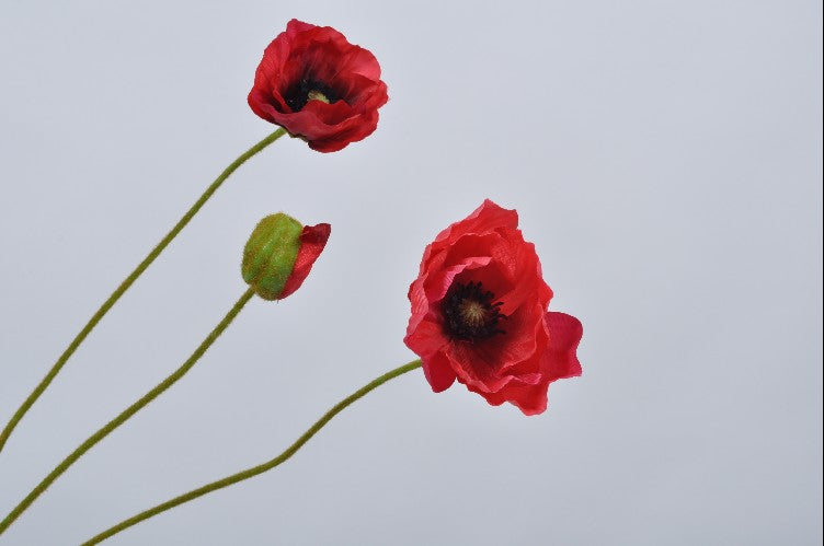 Poppy | Coquelicot 76cm Red