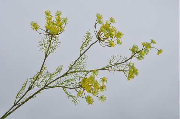 Queen Anne's Lace | Aneth 120cm Yellow