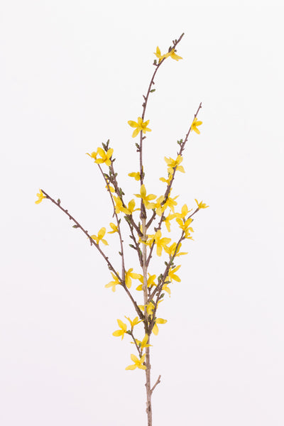 Forsythia 88cm Yellow