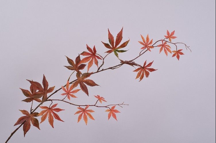 Maple | Érable 114cm Orange Red