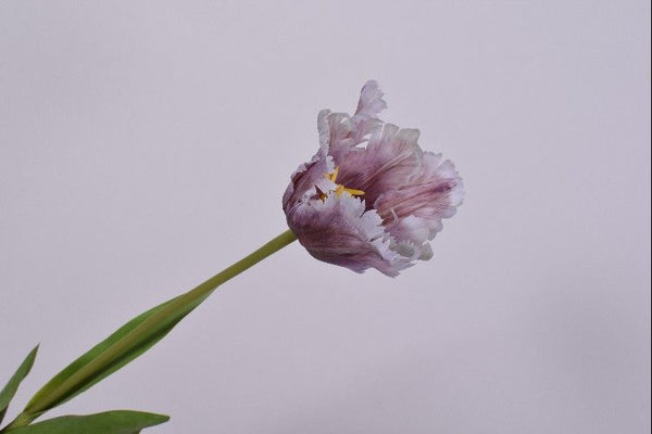 Tulip Parrot | Tulipe Perroquet 68cm Light Purple