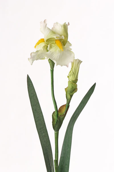Iris 71cm White Yellow