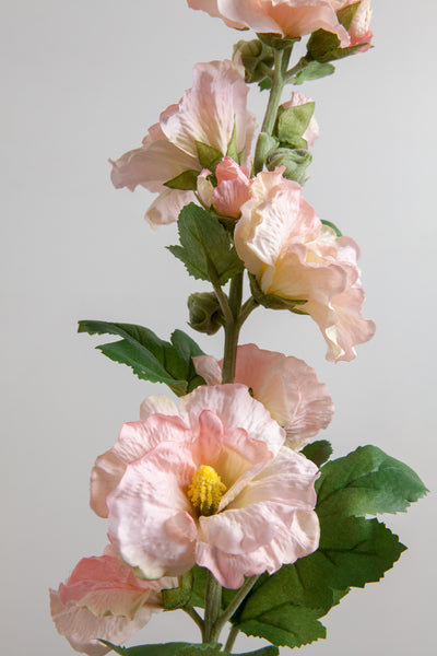 Hollyhock | Rose Trémière 85cm Peach