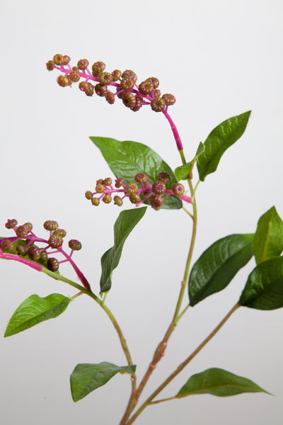 Phytolacca berries | Raisin d'Amérique 75cm Purple Green