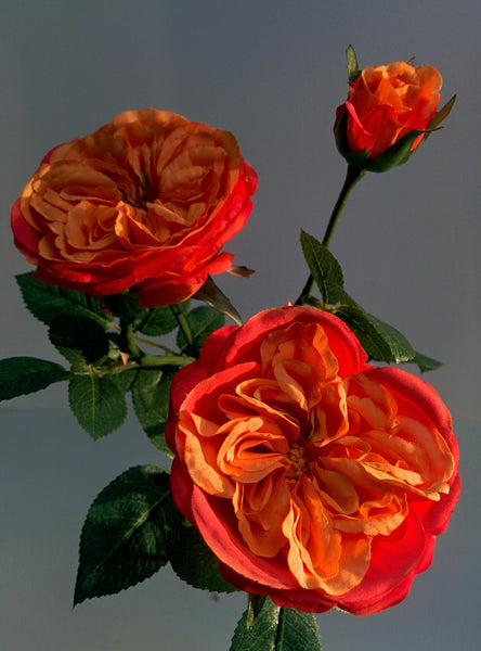 Rose 60cm Orange