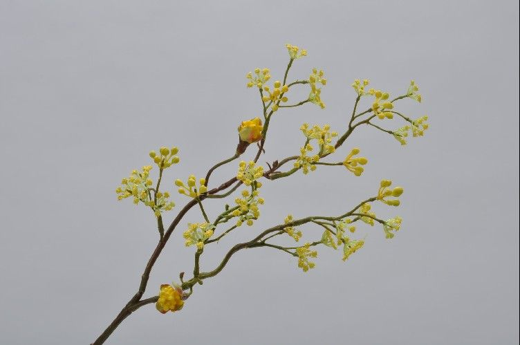 Berries | Baies 43cm Yellow