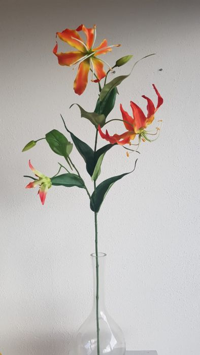 Gloriosa 70cm Orange