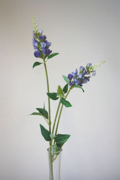 Catmint | Cataire 60cm Blue