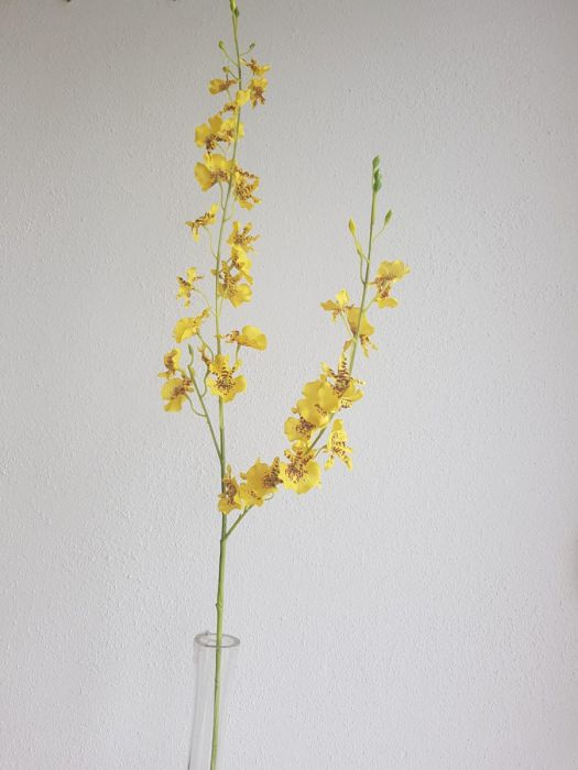 Orchid | Orchidée 70cm Yellow