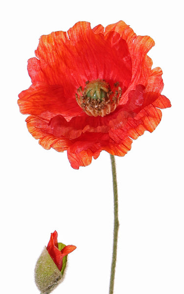 Poppy | Pavot 70cm Red