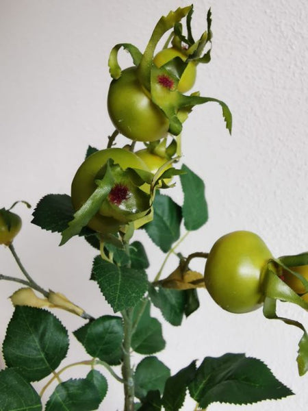 Wild Rose Hip Berries | Cynorhodon Rosier 60cm Green