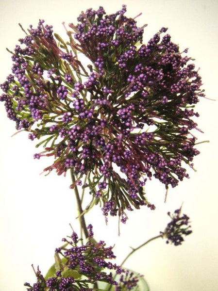 Yarrow | Millefeuille 80cm Purple