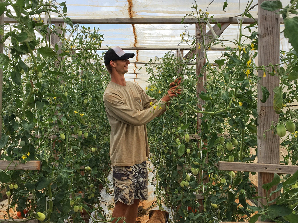"Kauai's ""Compost King"" is the Unlikeliest of Tomato Farmers"
