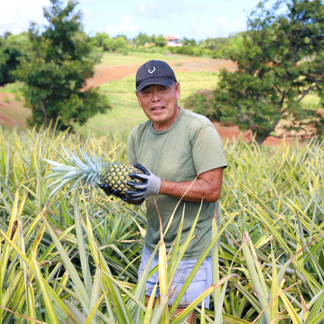 Man holding pineapple in a field
