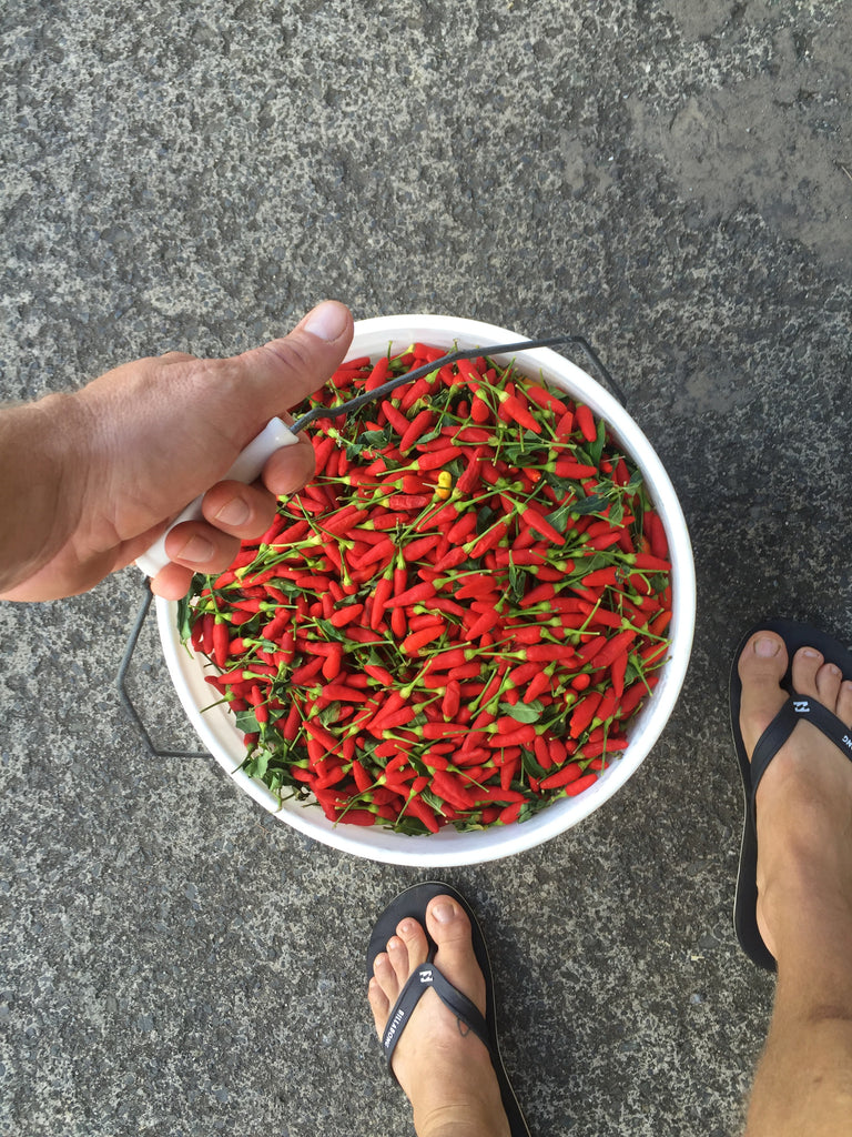 bucket of chili peppers